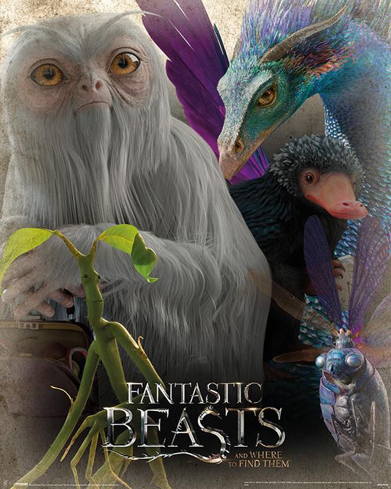 Plakát, Obraz - Fantastická zvířata a kde je najít - Fantastic Beasts, (40 x 50 cm)