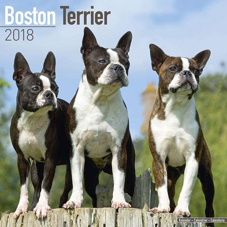 Kalendář 2018 Bostonský teriér