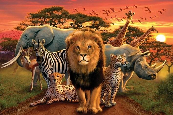 Plakát, Obraz - African kingdom - africké království, (91,5 x 61 cm)