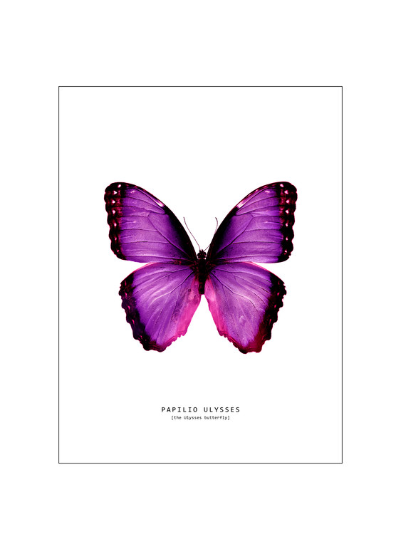 Ilustrace butterfly 2, Finlay & Noa