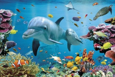 Poster Tropical uderwater ocean
