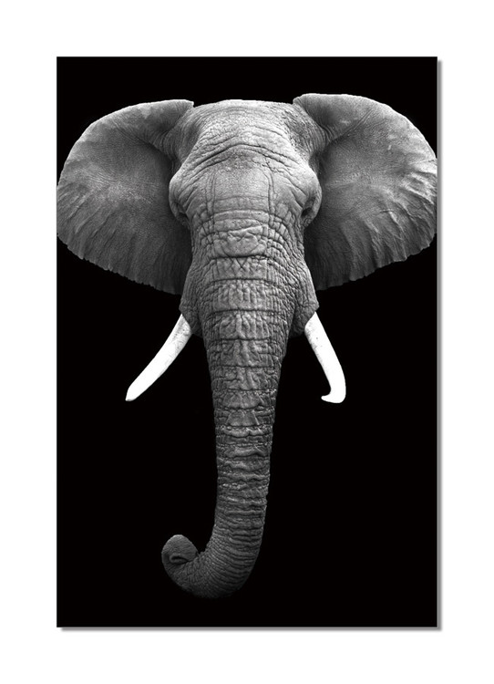 African Elephant (B&W) Moderne billede