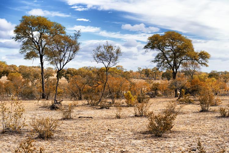 Arte fotográfico African Savannah Landscape