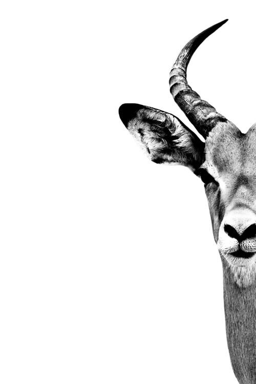 Arte fotográfico Antelope Face White Edition