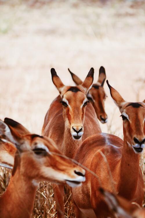 Kunst fotografie Antelope gang