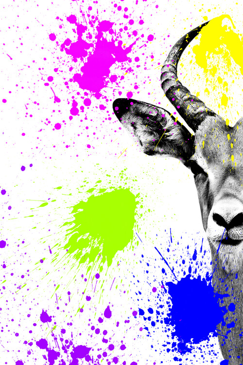 Umelecká fotografia Antelope Impala Portrait