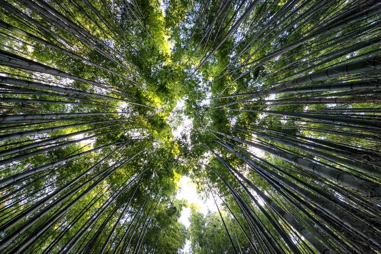 Arte fotográfico Bamboo Forest II