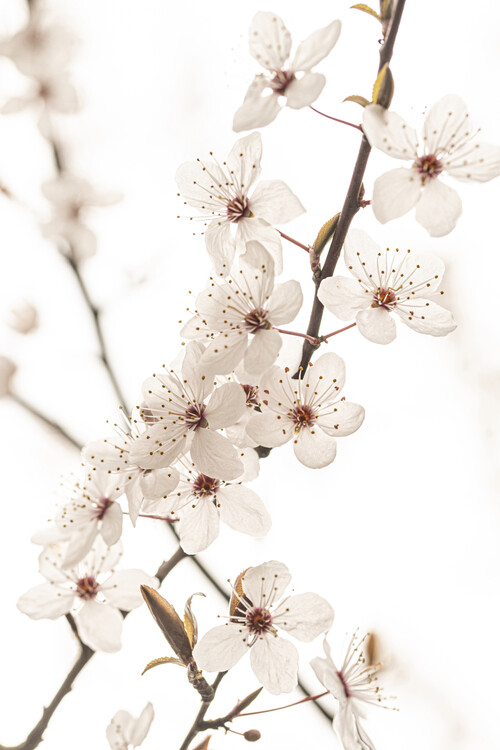 Umelecká fotografia Blossoming