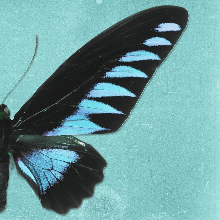 Umelecká fotografia BROOKIANA SQ - TURQUOISE
