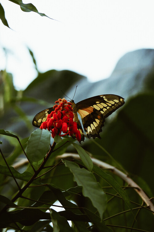 Umelecká fotografia Butterfly feast