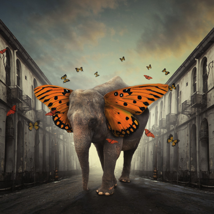 Photographie d'art Butterphant