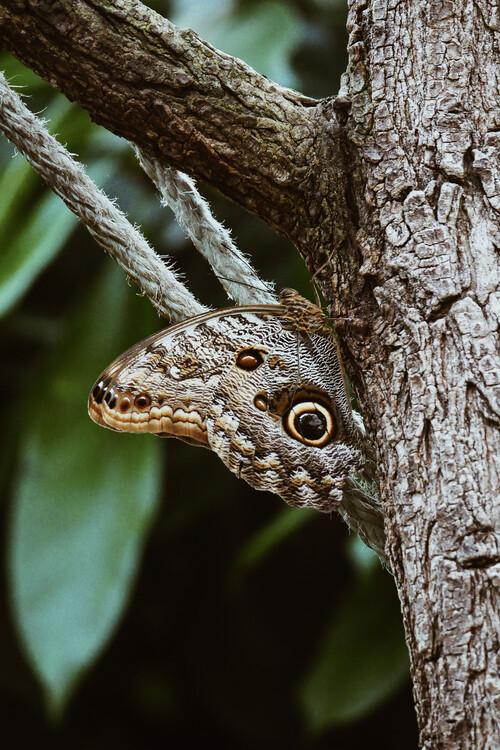 Umelecká fotografia Camouflaged butterfly