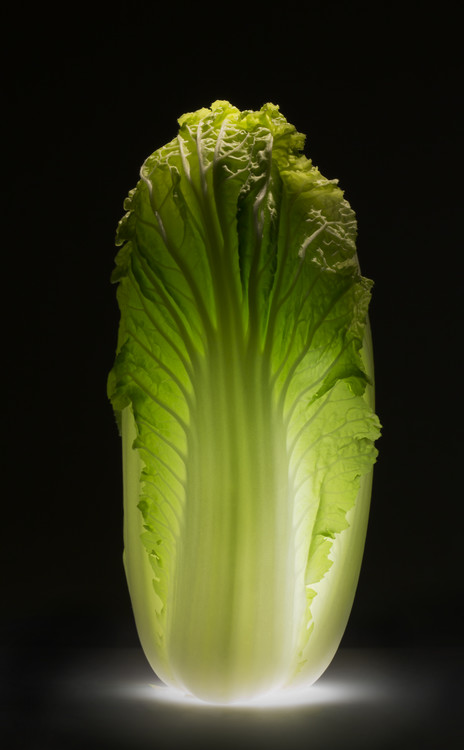 Arte fotográfico Chinese cabbage