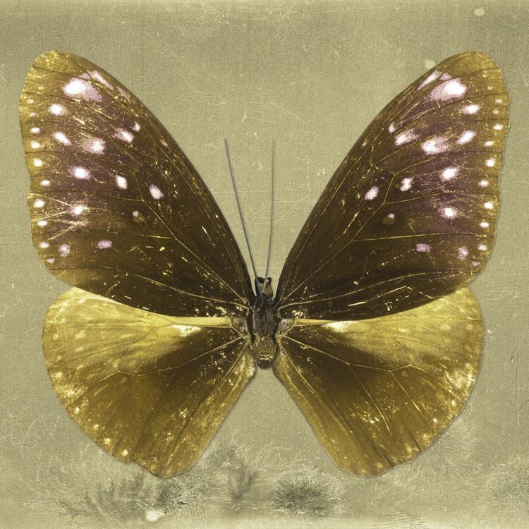 Umelecká fotografia EUPLOEA SQ - GOLD