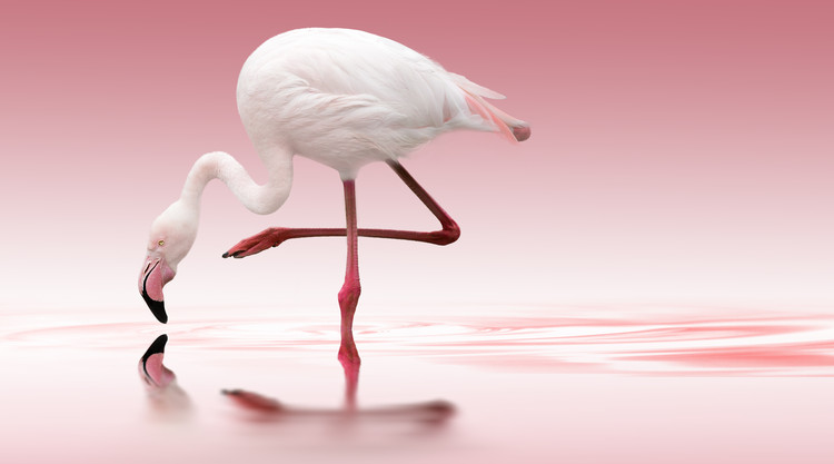 Photographie d'art Flamingo