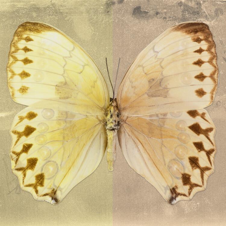 Umelecká fotografia FORMOSANA SQ - YELLOW & DARK BEIGE
