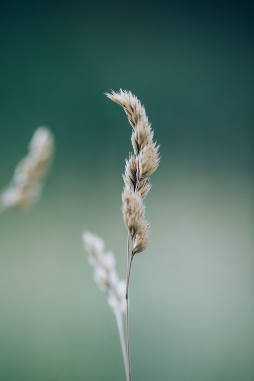Kunstfotografi Majestic dry plant