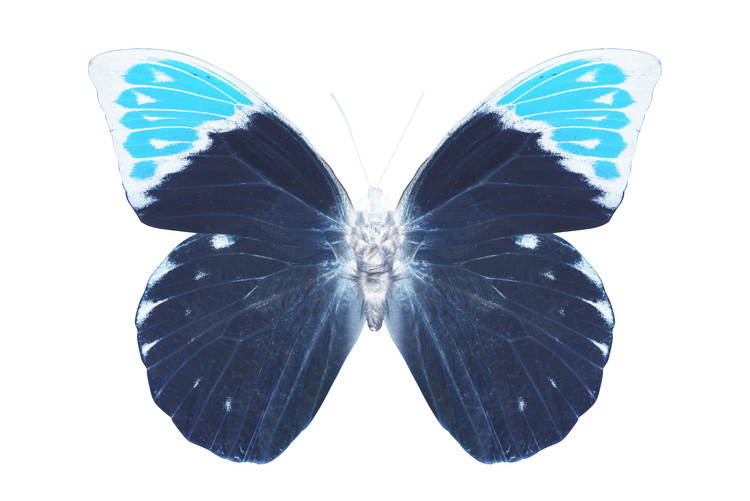 Kunstfotografi MISS BUTTERFLY HEBOMOIA - X-RAY White Edition