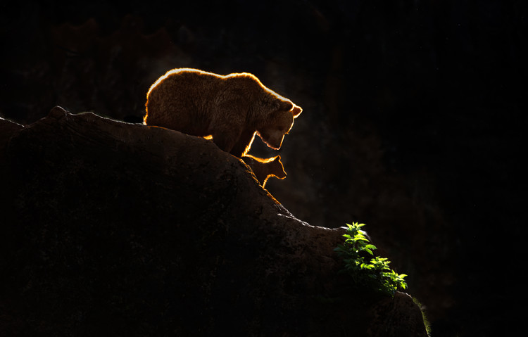 Kunstfotografie Mom bear with cub