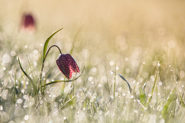 Kunst fotografie Morningdew