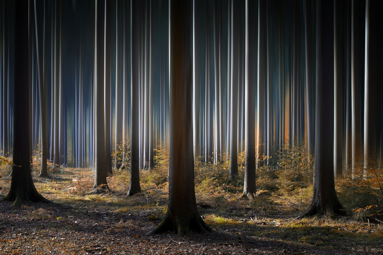 Photographie d'art Mystic Wood