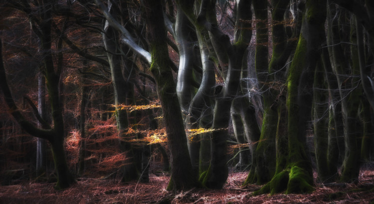 Kunst fotografie Mystical Speulderforest