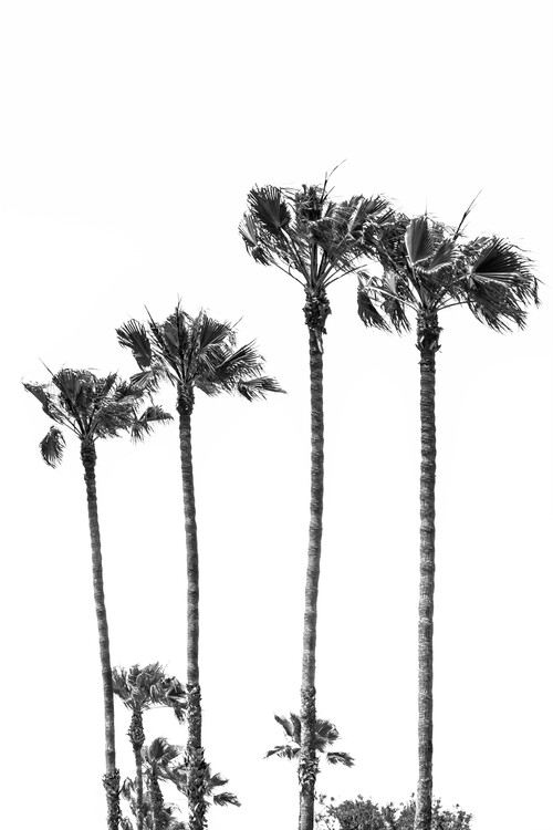 Kunstfotografie Palm Trees at the beach