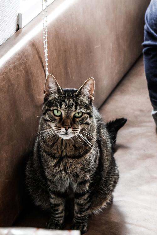 Umelecká fotografia Stubborn cat