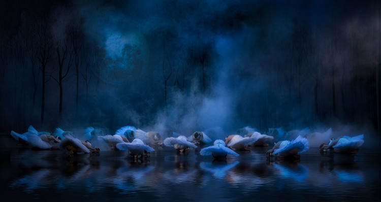 Photographie d'art Swans on the lake....