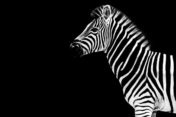 Arte fotográfico Zebra Black Edition