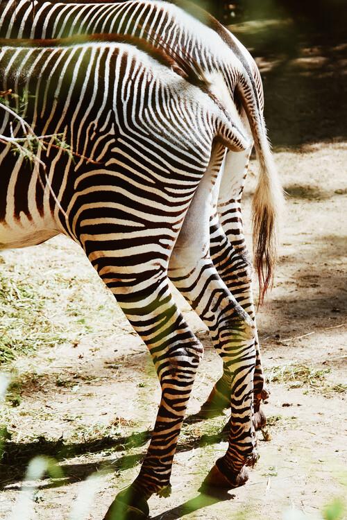 Arte fotográfico Zebra tails