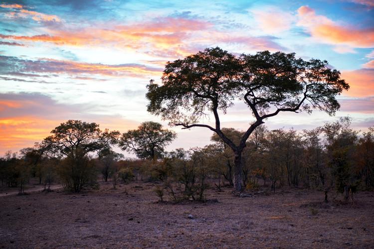 Kunst fotografie African Landscape