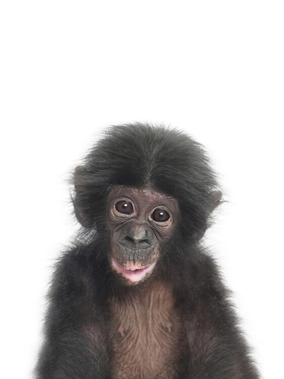 Fotografia artystyczna Baby Monkey