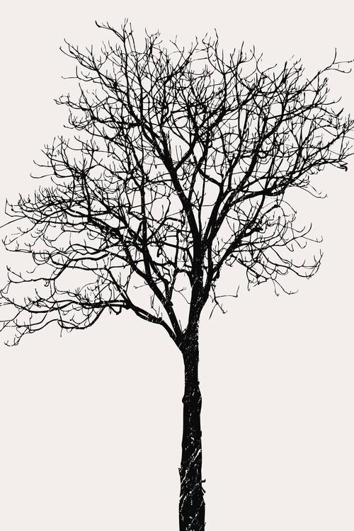 Ilustracja Black Birch