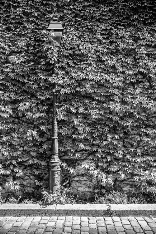 Kunstfotografie Black Montmartre - Hidden between the Leaves