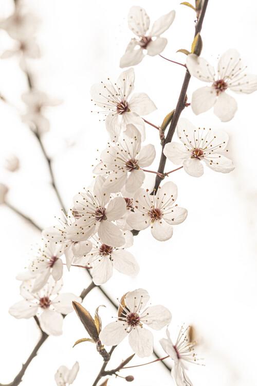 Kunstfotografi Blossoming