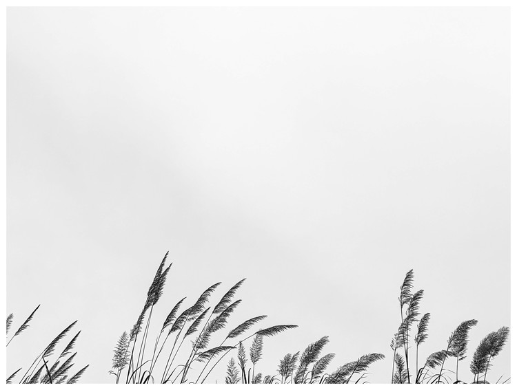 Kunstfotografie border grass top