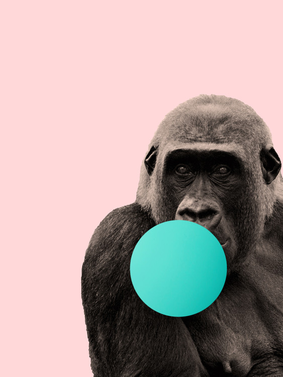 Umelecká fotografia Bubblegum gorilla