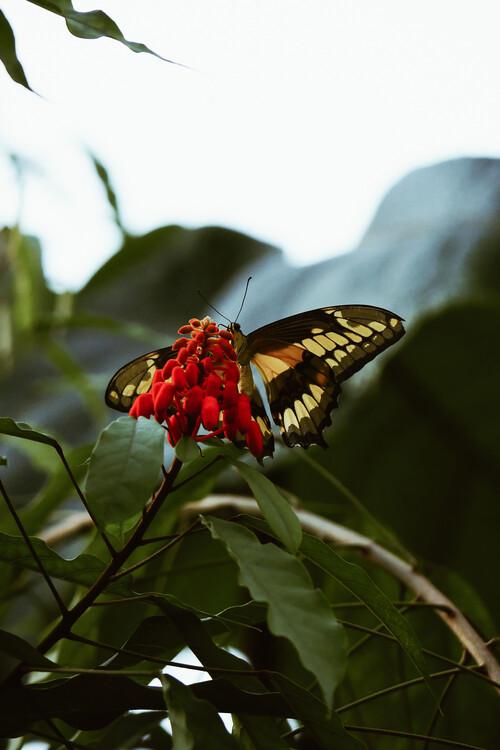 Umělecká fotografie Butterfly feast