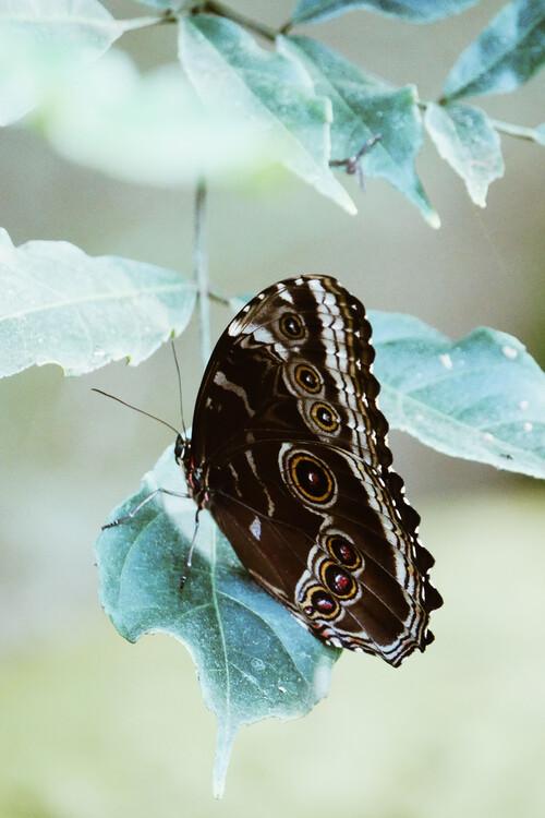 Umělecká fotografie Butterfly portrait