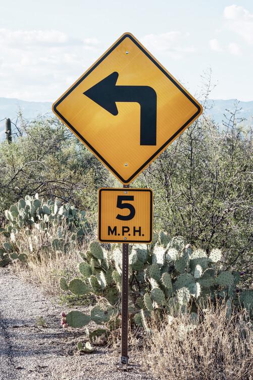 Photographie artistique Cacti Cactus Collection - 5 MPH