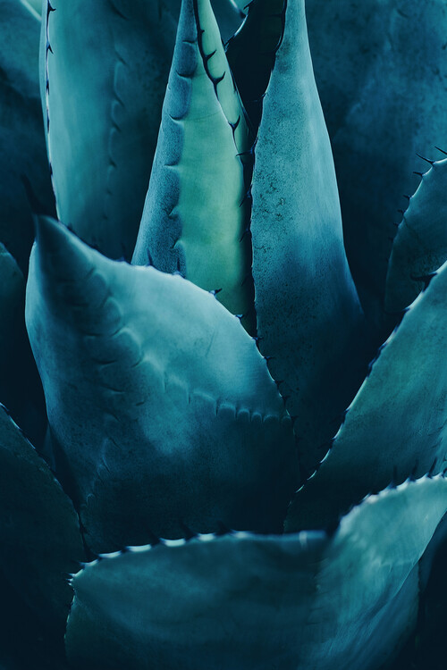 Konstfotografering Cactus No 4