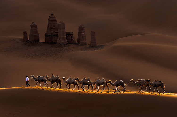 Photographie d'art Castle and Camels