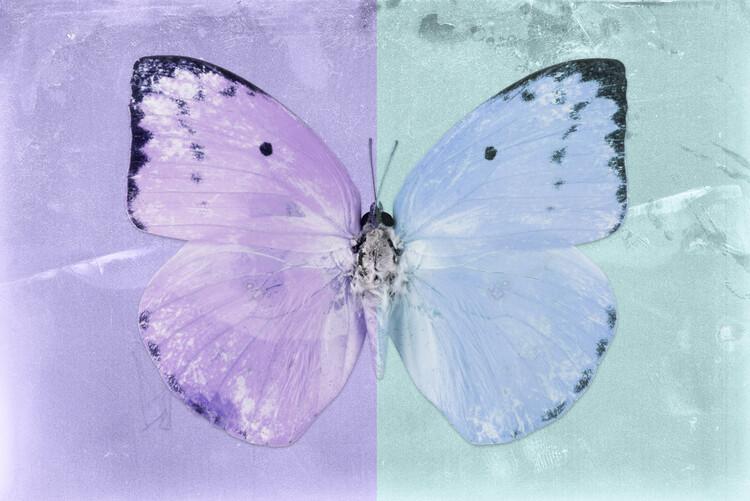 Artă fotografică CATOPSILIA - MAUVE & TURQUOISE