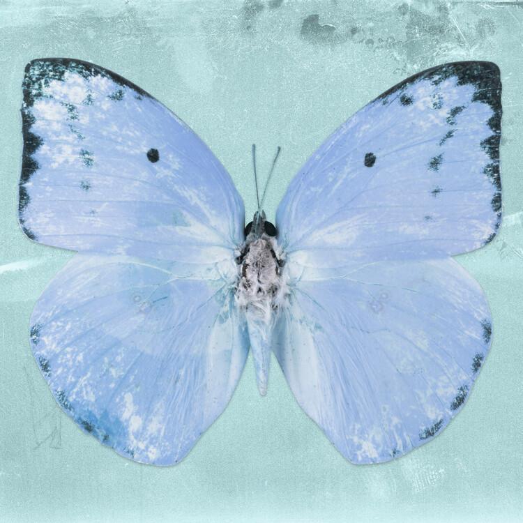 Artă fotografică CATOPSILIA SQ - TURQUOISE
