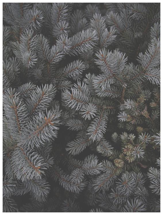Umělecká fotografie christmas tree foilage
