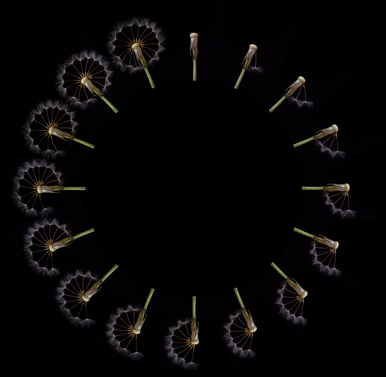 Photographie d'art Clock Dandelion