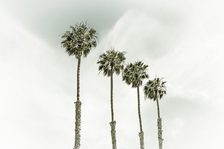 Umělecká fotografie Coastal Palm Trees | Vintage