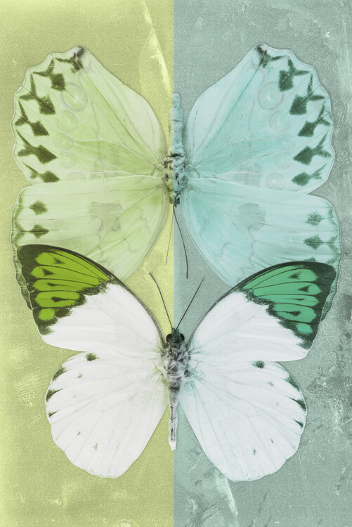 Artă fotografică DUO FORMOIA - LIME GREEN & CORAL GREEN