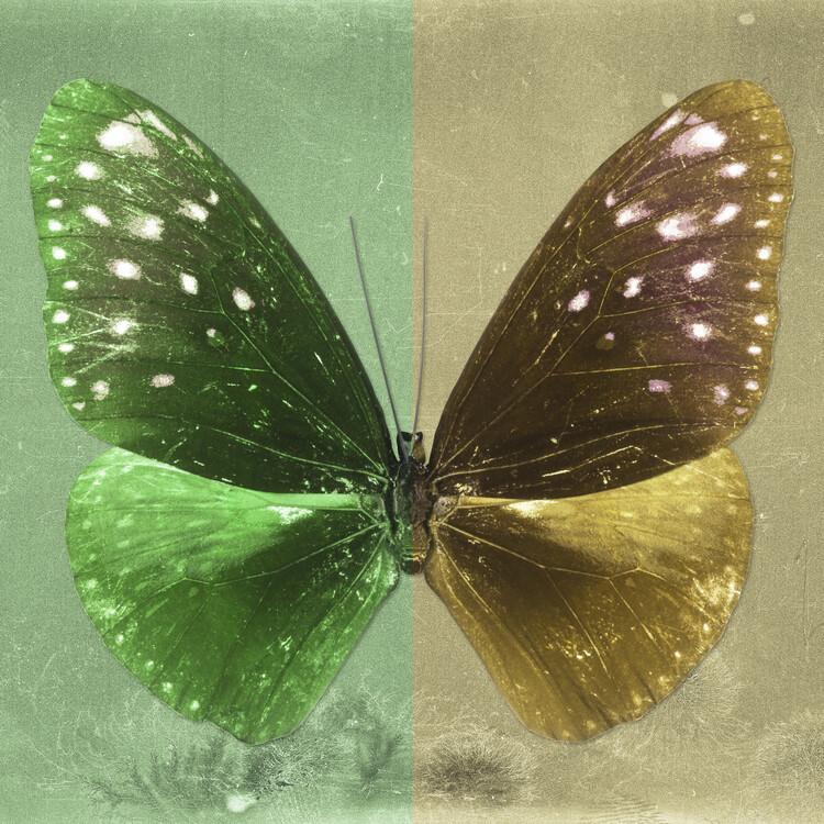 Artă fotografică EUPLOEA SQ - GREEN & GOLD